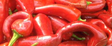 Le spezie nella cucina ebraica tripolina, il problema della conservazione cibo